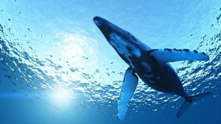 wallpaper-whale-photo-08