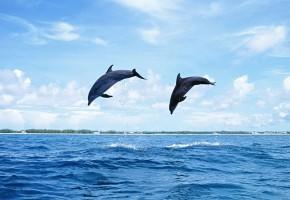 【雑学】世の中の「は??」あなたは知ってたか?イルカとクジラの違いとは??