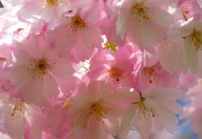 画像ギャラリー 特集テーマ: 桜